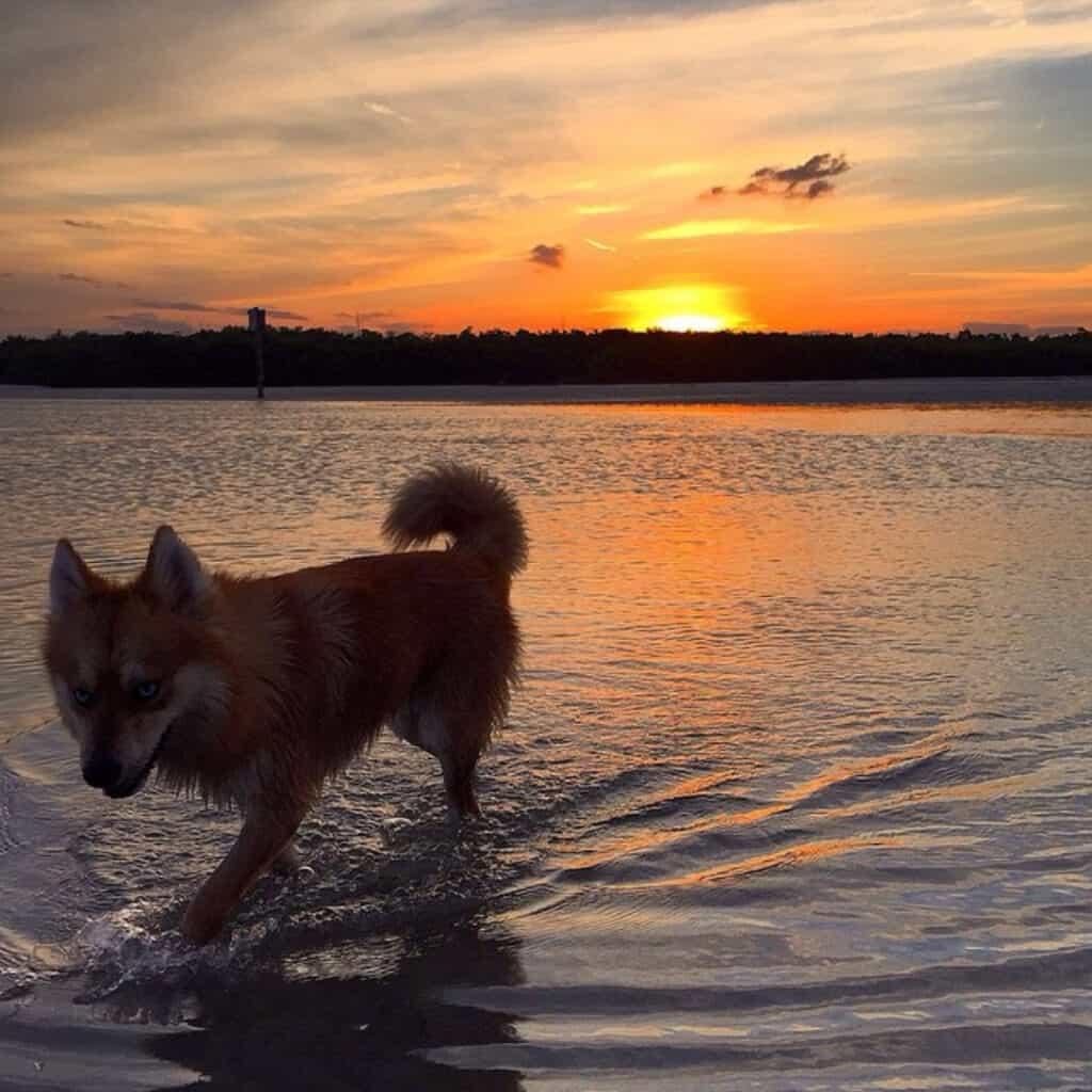 Bonita Beach Dog Park