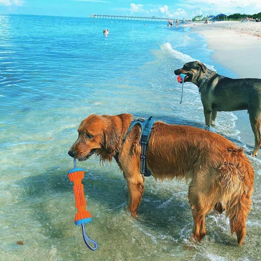 Brohard Beach Dog Friendly