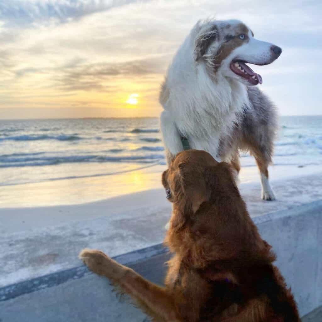 Fort De Sota Dog Beach