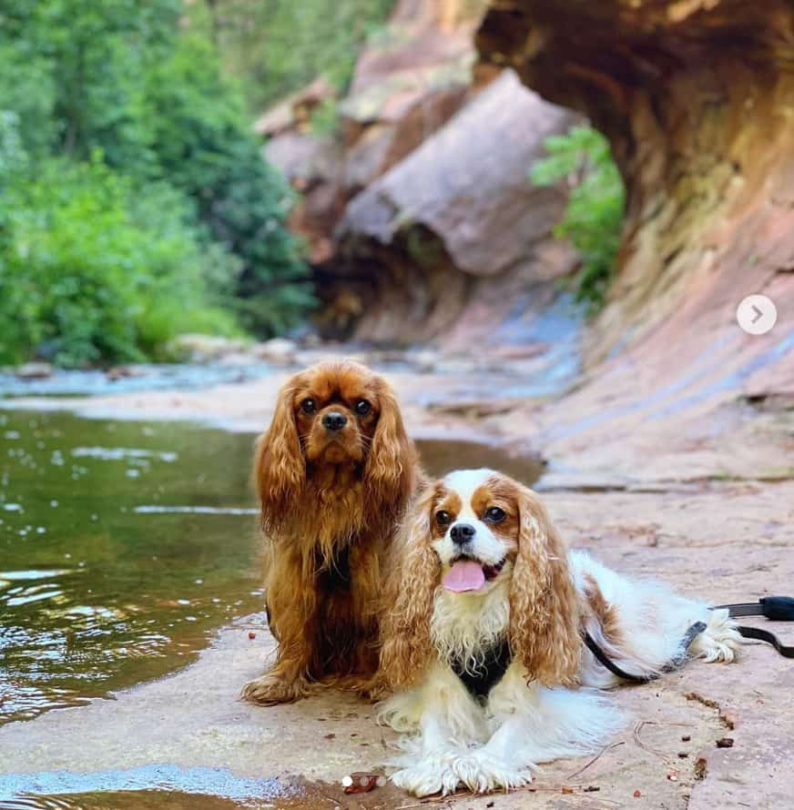 Pet Friendly Sedona West Fork Trail